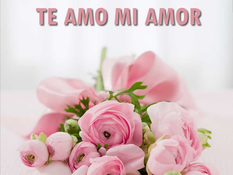 Foto de Amor: Foto de Amor Whatsapp